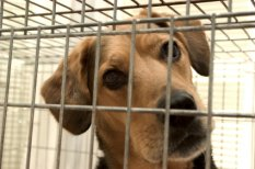 No-kill vs open admission shelters