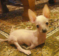 Two-legged dog